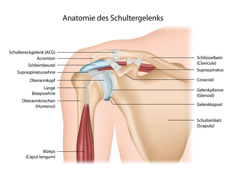 Schulterchirurgie – Experten und Spezialisten in der Schweiz