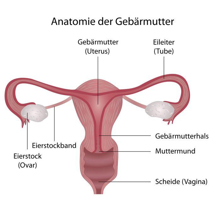 Die Vagina - Anatomie, Funktionen und häufige Erkrankungen
