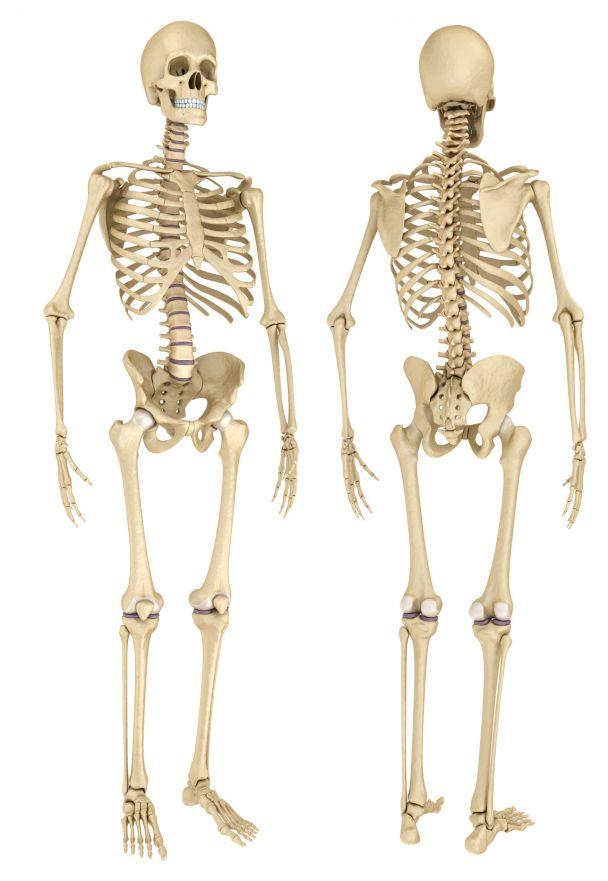 Osteomalazie | Knochenerweichung bei Mineralmangel