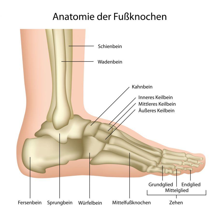 Fußluxation und -distorsion | Verrenkung und Verstauchung