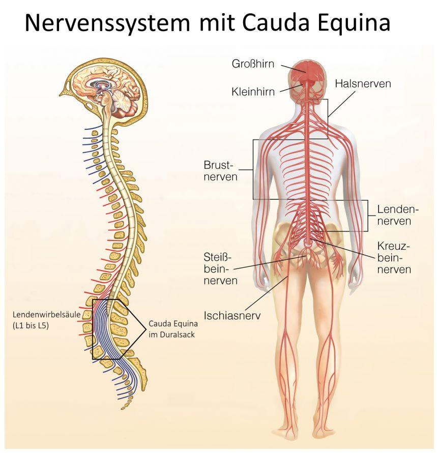 Fantastisch Hals Nerven Anatomie Galerie - Anatomie Ideen - finotti.info