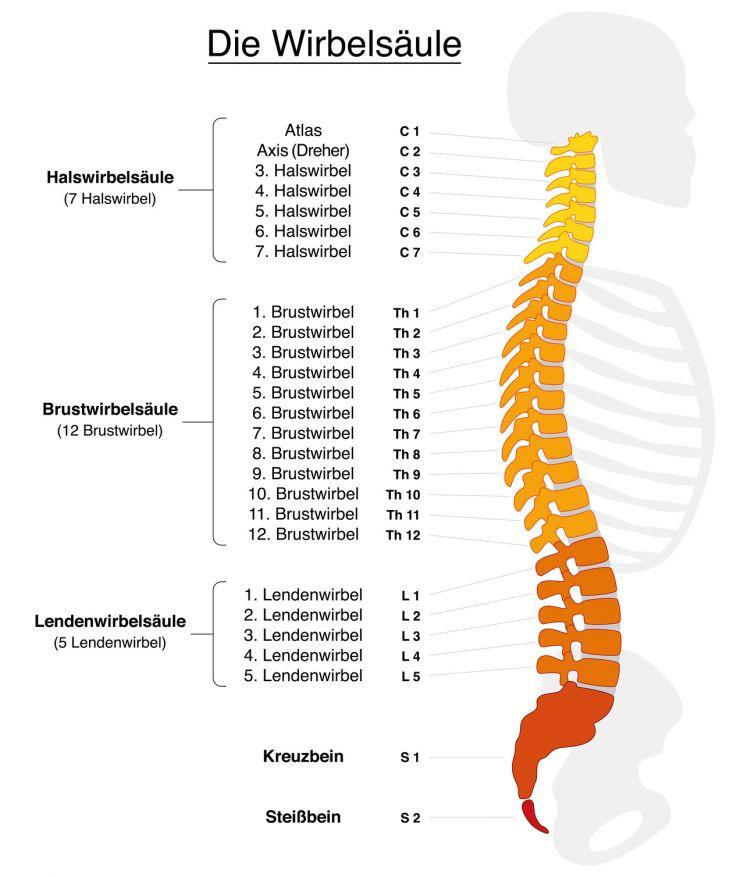 Schmerzen der unteren Lendenwirbelsäule (LWS)