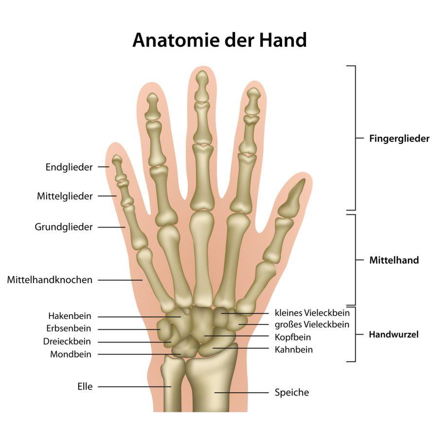 Distale Radiusfraktur - Speichenbruch am Handgelenk